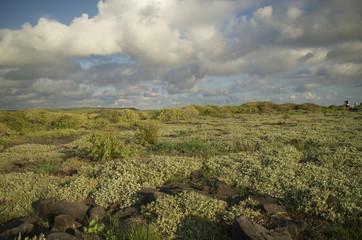 bosque de galapagos