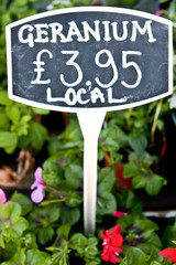 Price tag for a geranium plant