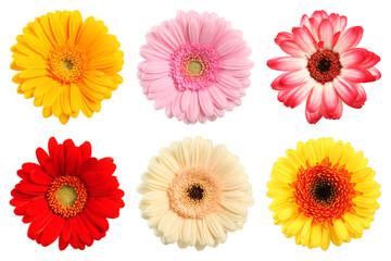 Bunte Deko Blumen