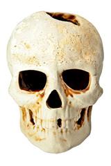 skull in fas