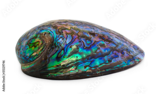 Paua Shell isolated on white
