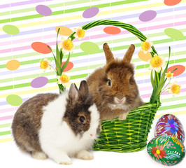 rabbits rabbits in basket with narcissus and eggs