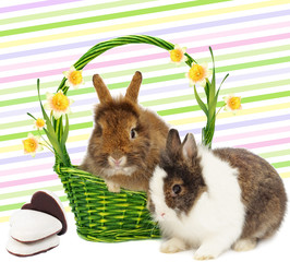 rabbits in basket with narcissus and cookies