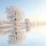 Fototapety Frosty winter tree against a blue sky with reflection in water