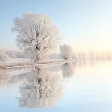 Arbre hiver glacial contre un ciel bleu avec reflet dans l'eau