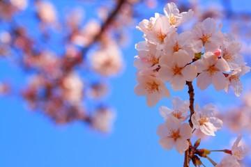 春色と青空