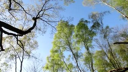 Panoramique sous bois Droite gauche haut bas