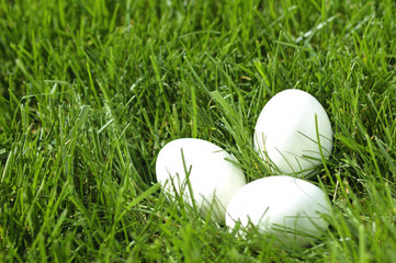 White eggs laying in grass