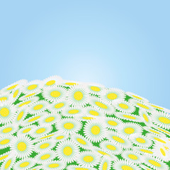 Green field with chamomile flowers , vector illustration