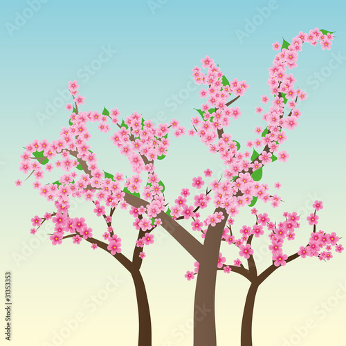 Cherry blossom, flowers of sakura, vector illustration