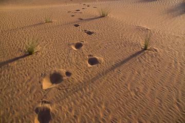 Footsteps in the hot desert sands at sunset, Egypt