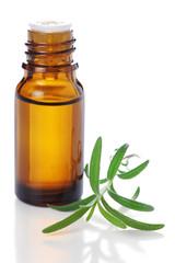 bottle of aromatic essence oil and fresh rosemary on white isola
