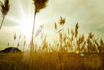 fondo de naturaleza con puesta de sol y vegetacion