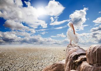 paisaje desertico y pelicano