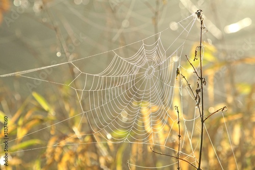 Spider web in a meadow on a foggy morning © joda