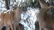 deer winter in forest