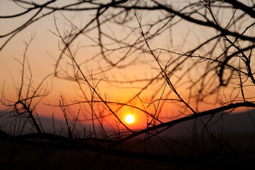 Sunset through the branches of trees