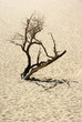 Dead standing tree in desert