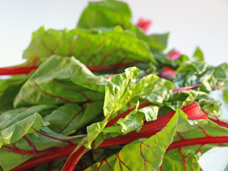 Chard leaves up close