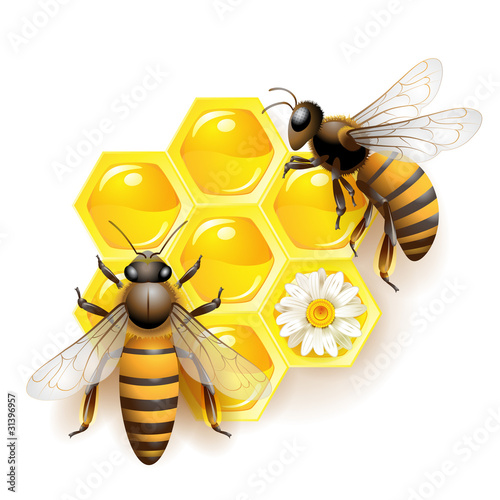 Two bees and honeycombs isolated on white