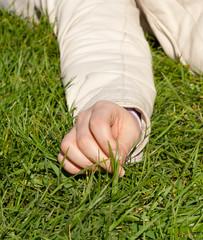 Ciuffo d'erba
