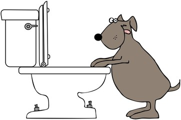 Dog Drinking From Toilet