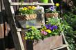 Blumen Töpfe  Pflanzen