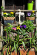 Blumen Töpfe  Hütte