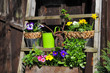 Frühling Blumen Deko Vintage