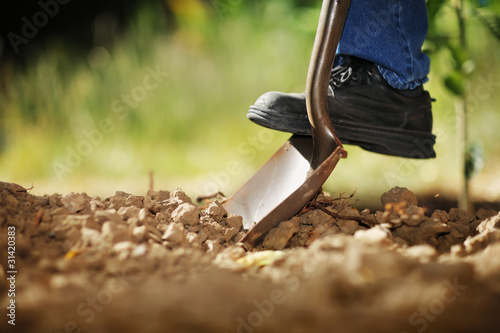 canvas print picture Digging soil with shovel
