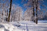 Fototapety Snowy Warsaw park