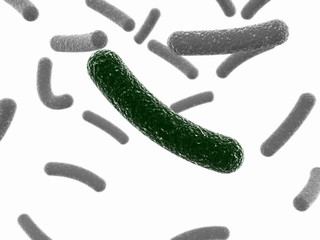 Green bacterium on a white background