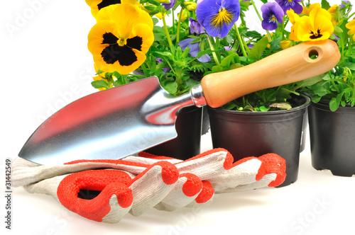 kolorowe bratki w doniczkach i narzędzia ogrodowe - 31442549