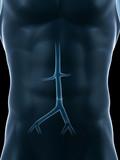 3d rendered medical illustration - abdominal artery poster