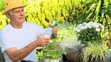 Man spraying potted plants in his garden