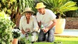 Retired couple gardening