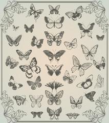 vintage stylized set of butterflies