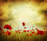 Fototapety poppy red