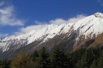 Himalayas and Trees