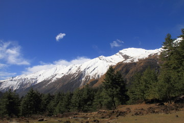 Himalayas and Forest