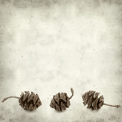 textured old paper background with cones of dawn redwood