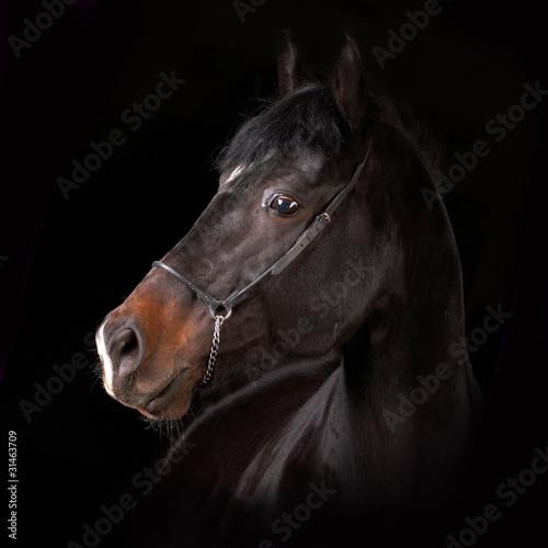 Fototapeten,equine,reiten,pferd,pferd