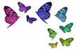 Colorful butterflies, each with a clipping path