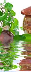 composition zen, plante dépolluante et galets