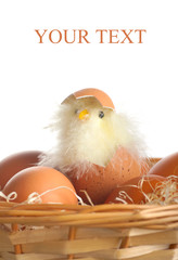 Hatched chicken in a basket with eggs