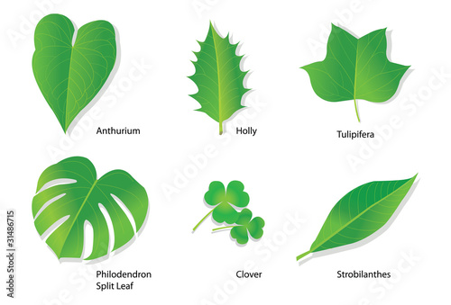 Tropical leaves with botanical names
