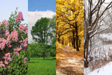 four seasons spring, summer, autumn, winter trees collage