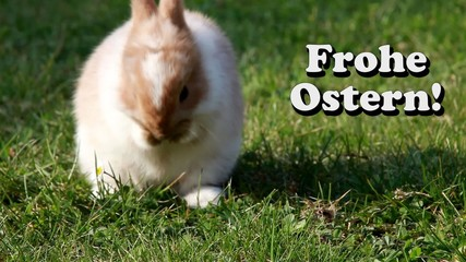 Easter bunny (German)