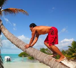 native latin indian climbing coconut palm tree trunk