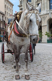 Traditional horse carriage in a square in Old Havana